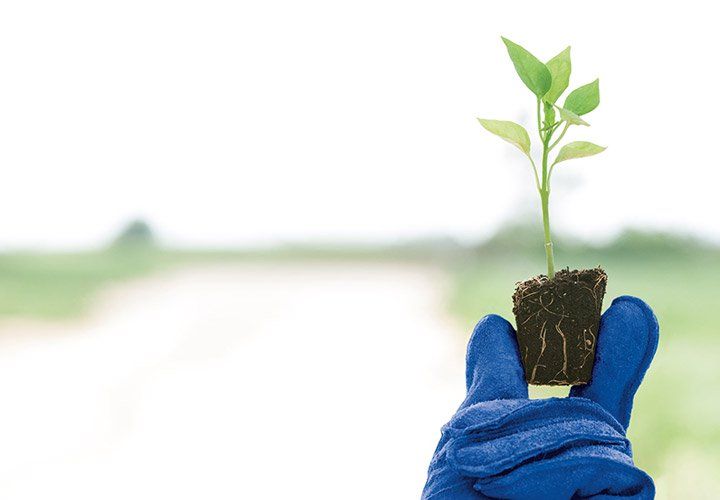 Blue glove holding a seedling